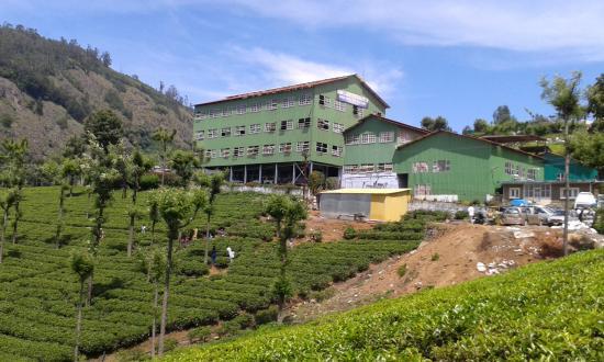 highfield-tea-factory
