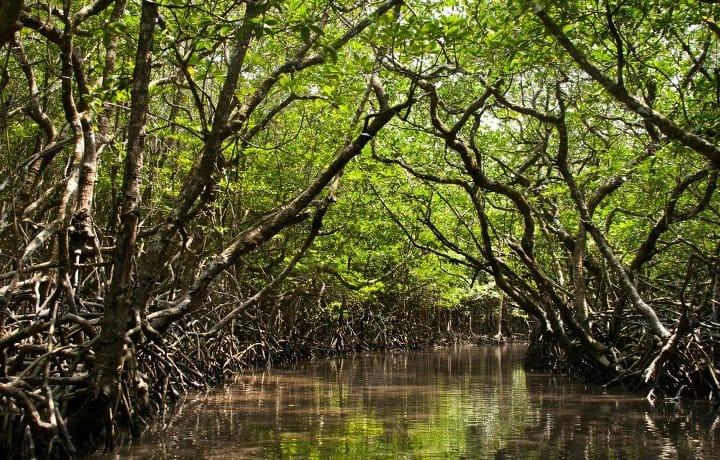 Baratnag Island